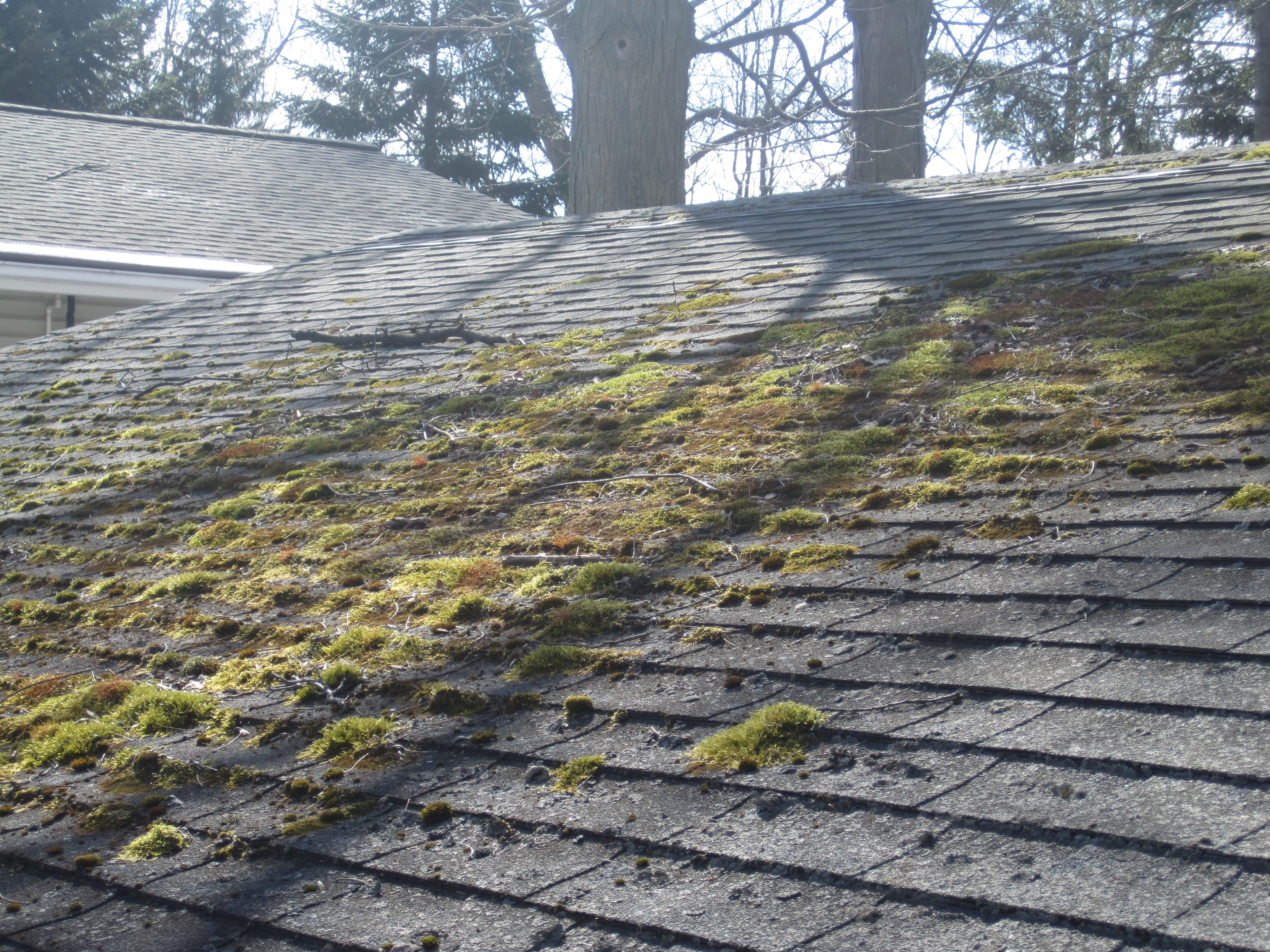 Roof Cleaning Facts Shingle Magician Roof Cleaning – Lichen Removal From Roof Shingles