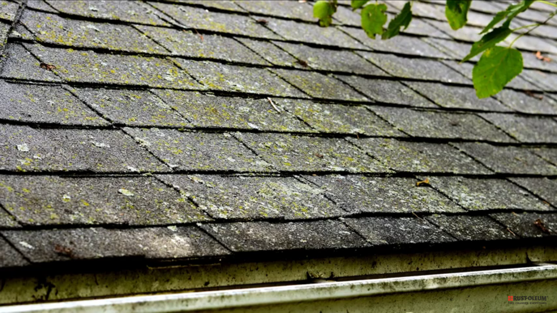 Roof Cleaning Facts